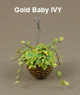 Gold Baby Ivy